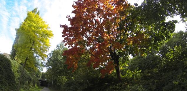 Herbstbaum - GoPro Hero3