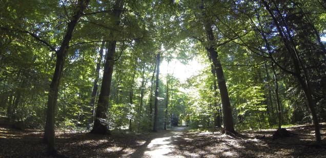 Schlosspark Benrath - GoPro Hero3